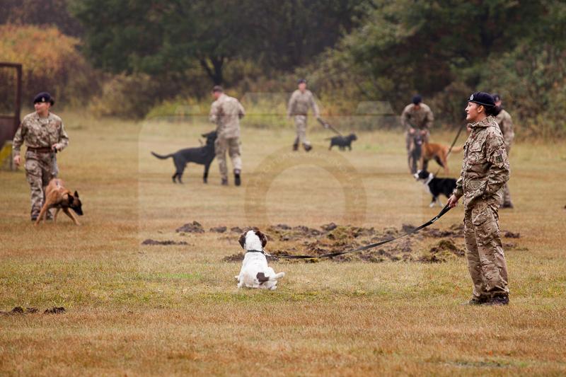 2016_10_20 1st Military Working Dog Regiment-101924