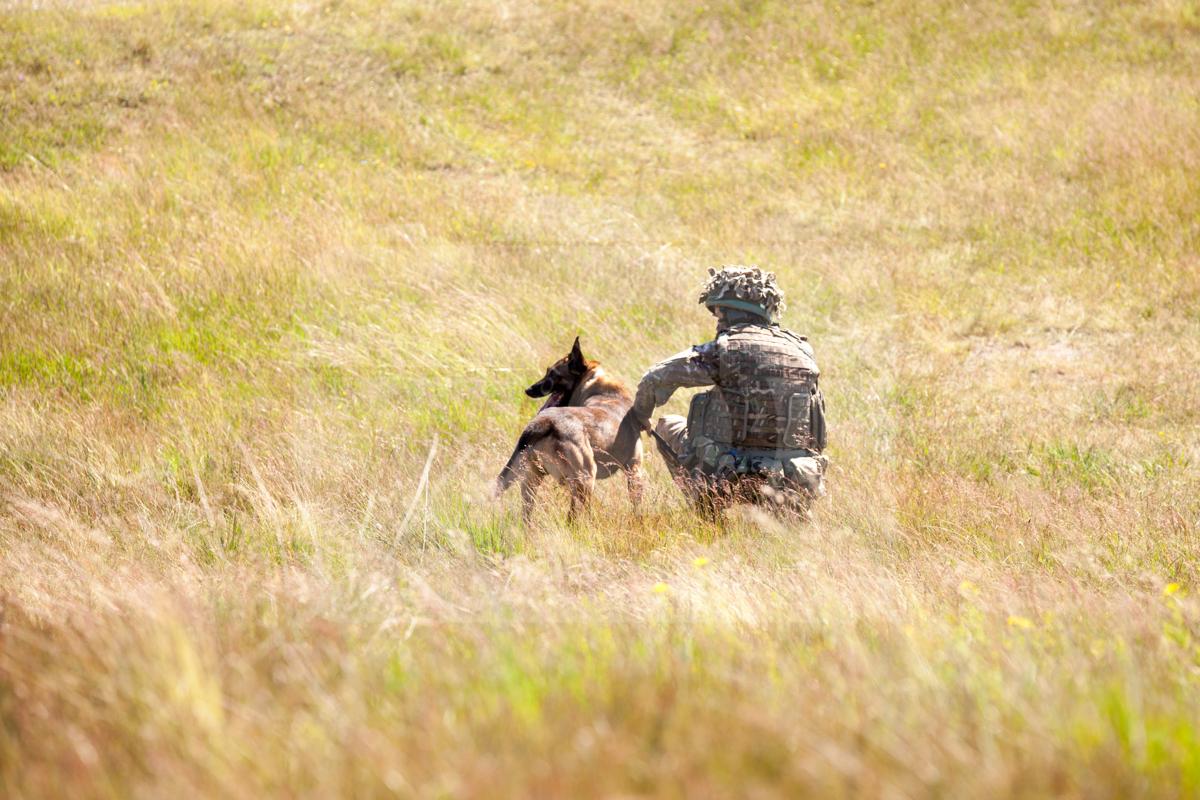 1st Military Working Dog Regiment