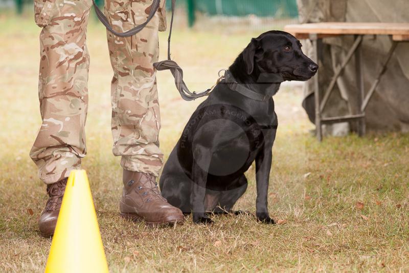 2016_10_20 1st Military Working Dog Regiment-121001