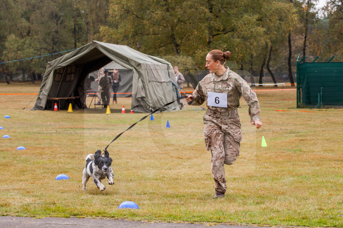 Hunde-Biathlon des 1st Military Working Dog Regiment